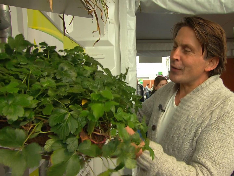 plantenmatten op tv