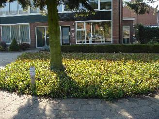 Gemeente Hardenberg (Euonymus plantmatten) covergreen