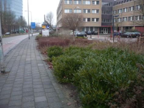 Onderhoudsvriendelijke kantoortuin in Zwolle