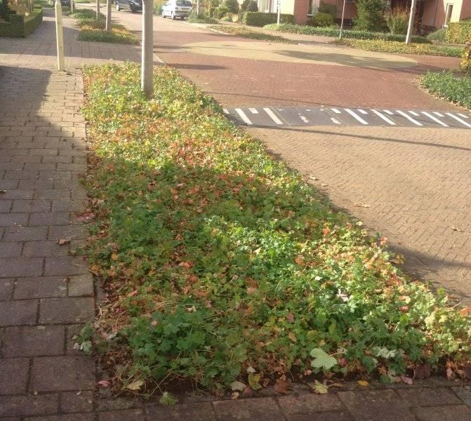 Parkeerplaats Woningbouwvereniging Zwolle covergreen