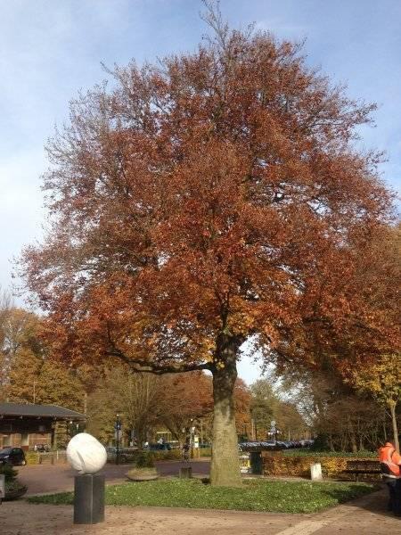 Bevrijdingsboom in Ermelo covergreen