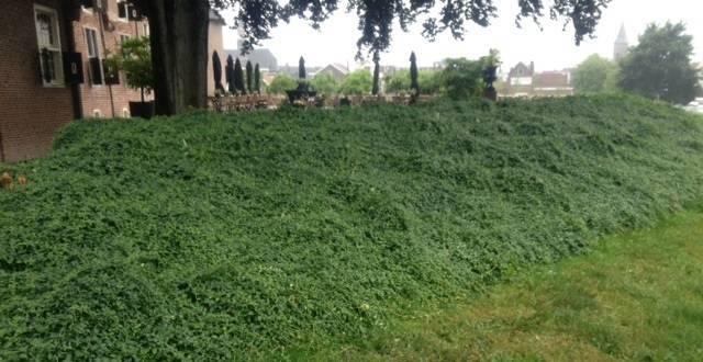 Gemeente Coevorden Plantenmat