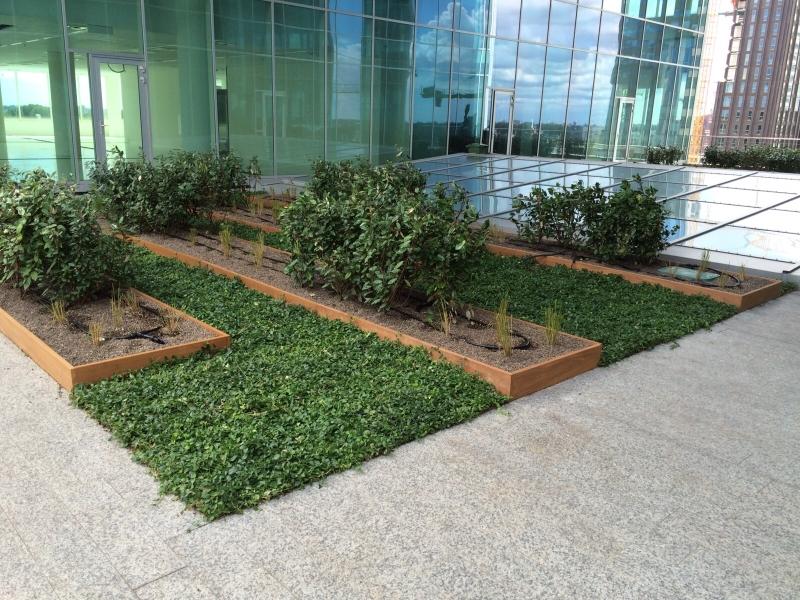 Plantenmatten in Amsterdamse daktuin