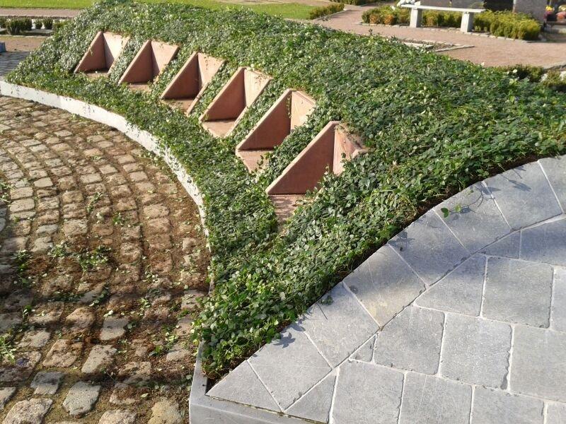 Vinca minor op begraafplaats