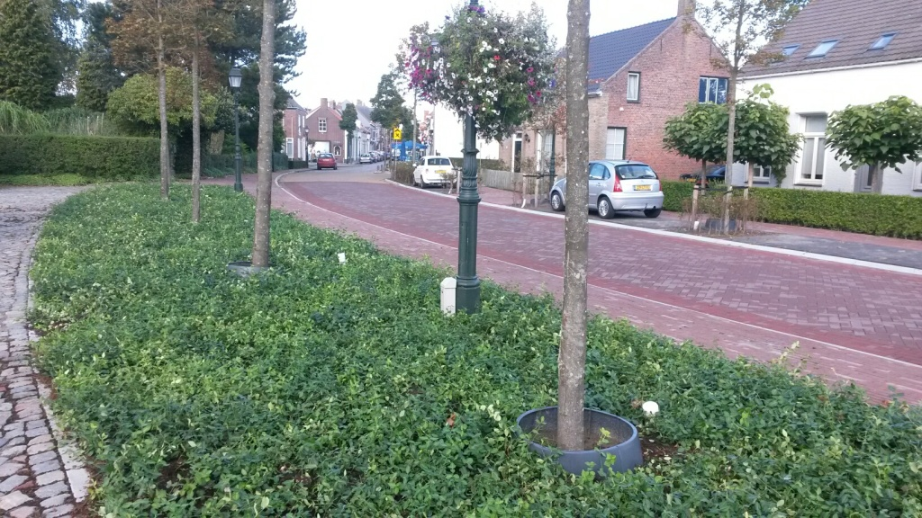 Covergreen in de Gemeente Sluis