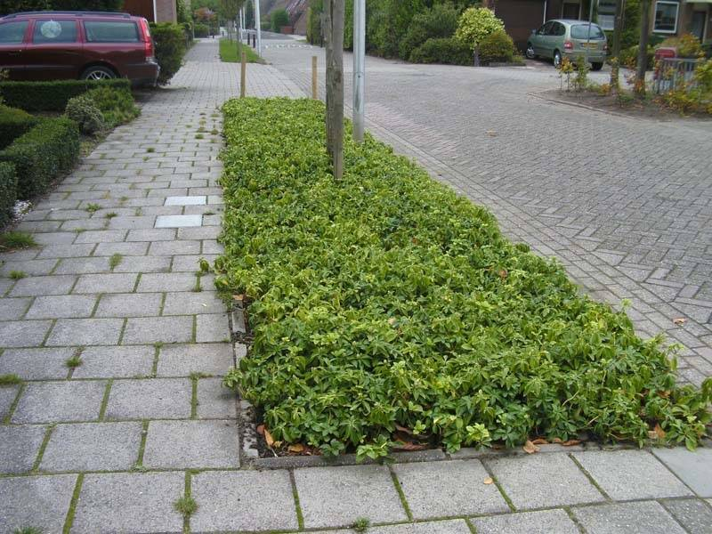 Bodembedekking in Hilversum