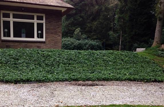 Helling bedekt met bodembedekkers covergreen