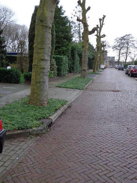 Boomspiegels gemeente Uithoorn covergreen
