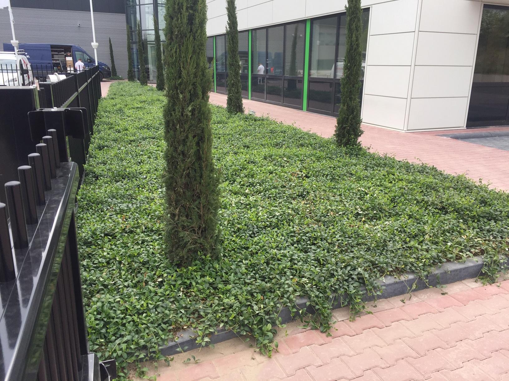 Hortilife Vinca Alba