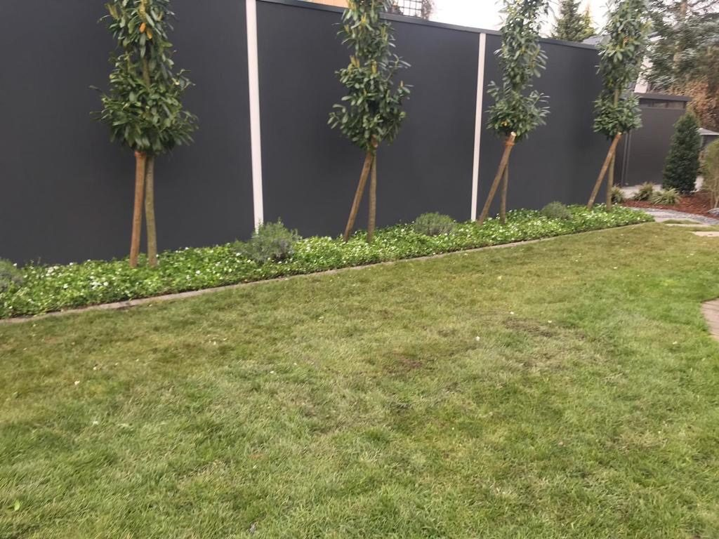 Garten mit Bodendecker