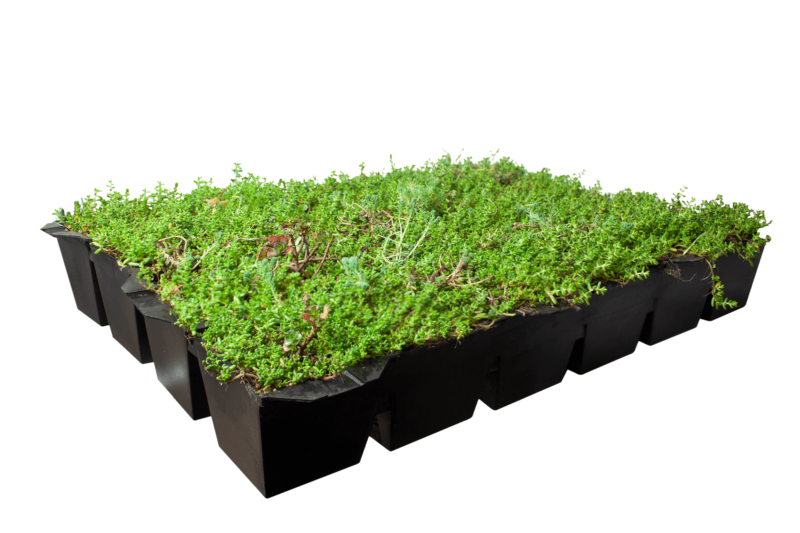 Covergreen® Sedum and a Sedum roof ready-to-use cassettes