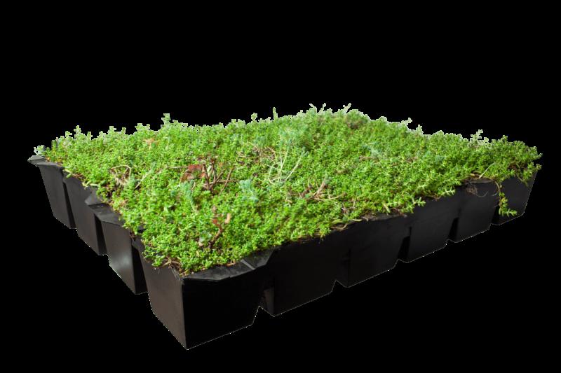 Covergreen® Sedumdach Kassetten für einfaches Gründach