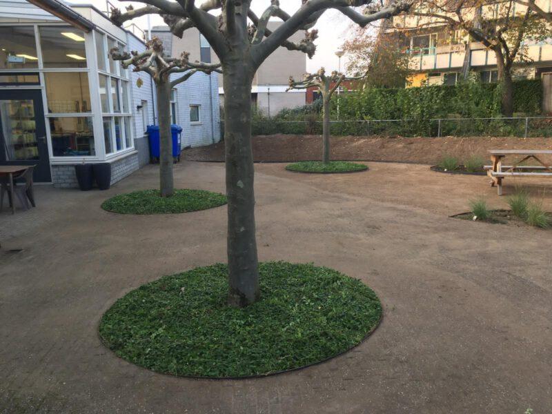 Direct groene Boomspiegels met Covergreen plantenmatten