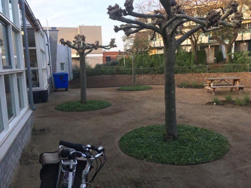Ronde boomspiegels met Covergreen maagdenpalm Vinca minor door Johan Wolters