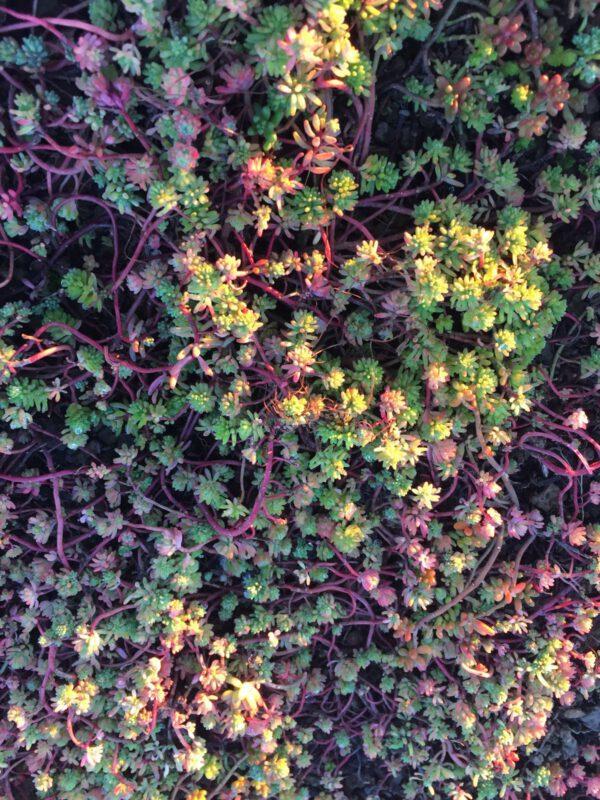 bodem- en dak vegetatie